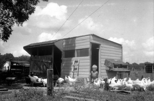 david-manthei-chicken-coop